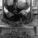 storia grifalco vini