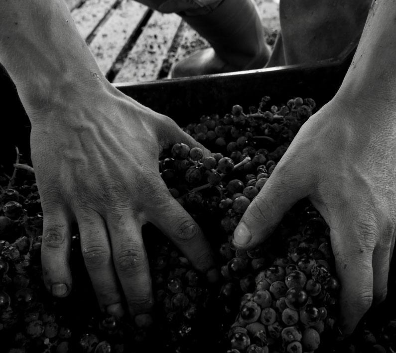 Grifalco vini Basilicata